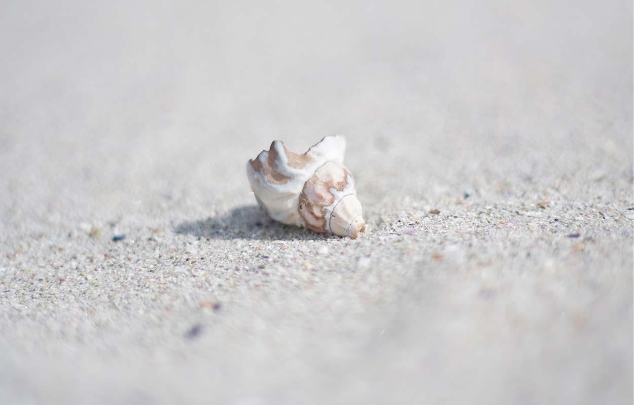 Et skjell alene på ei strand.